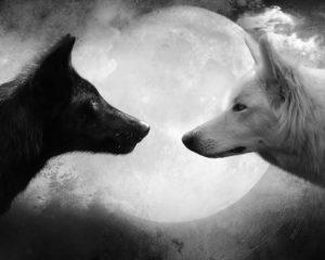 Conte des deux loups